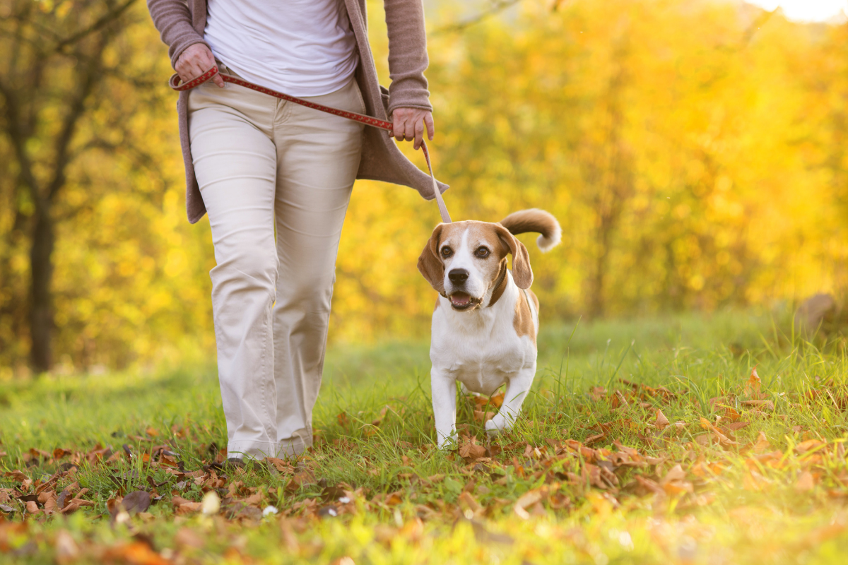 Dog friendly walking routes Portsmouth